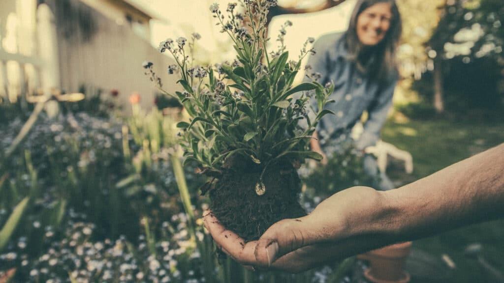 Comment bien choisir ses outils de jardinage ?